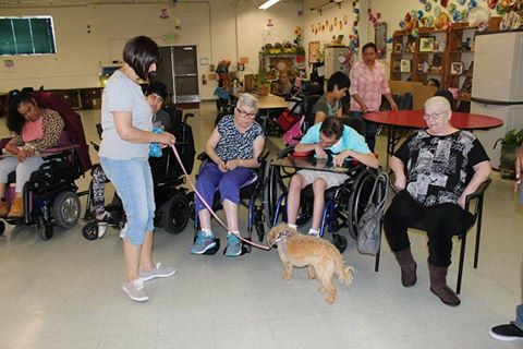 Ginger greets adults with cerebral palsy who volunteered to help with a large mailing for OBOL.